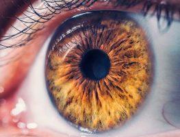 La Retina y sus enfermedades